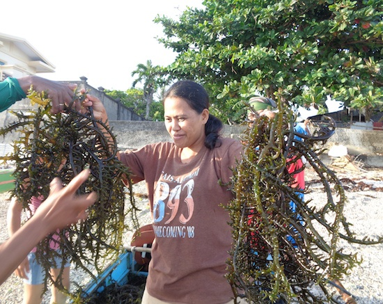 PH women farmers make UN Project Inspire Top 10