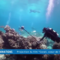 Monaco's Tubbataha Reef exhibit to come to PH in 2017