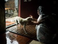 Tacloban City Evacuee Returns Home for Her Dogs during Tropical Storm Urduja