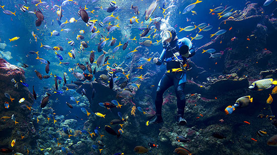 PHL's biggest dive show generates Php 80 million in bookings