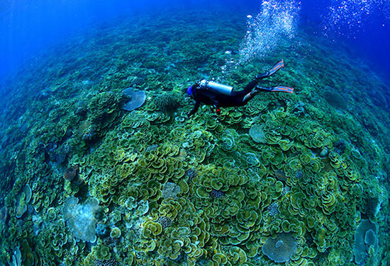 Tubbataha Reef: Crown jewel of Philippine diving
