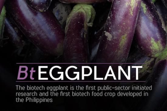 Bt Eggplant