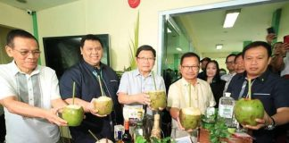 Philippines' young coconuts