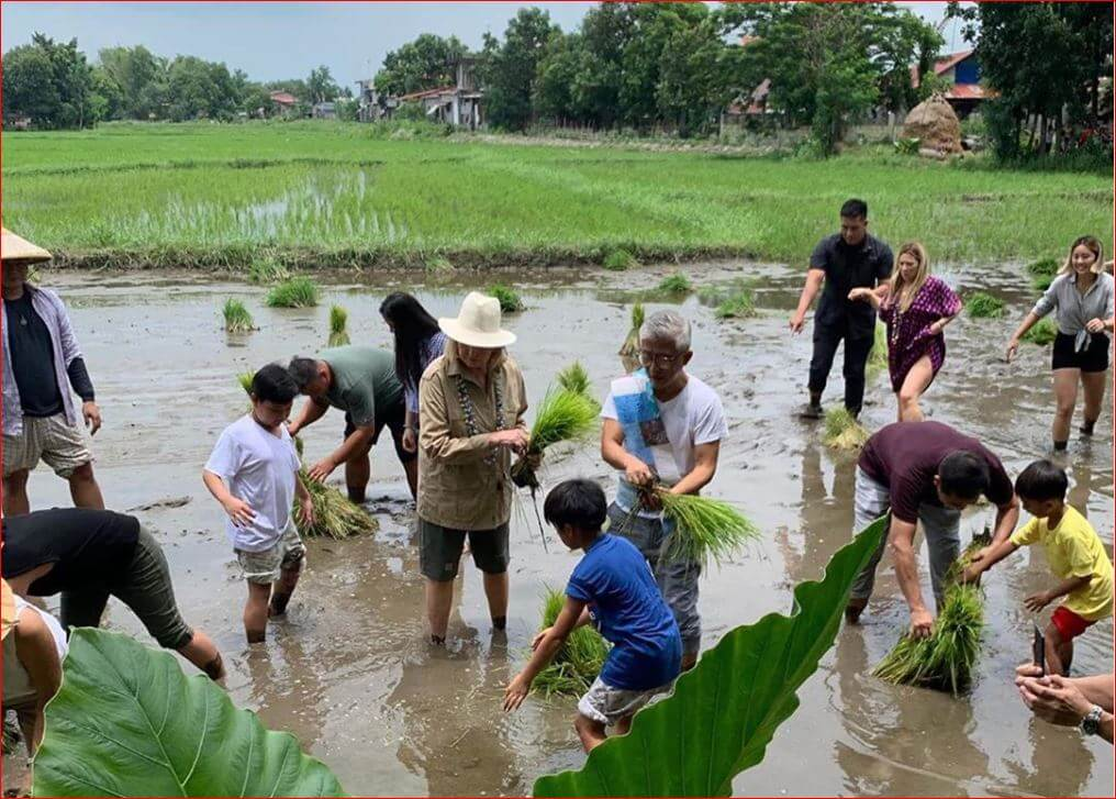 Martha Stewart planting rice