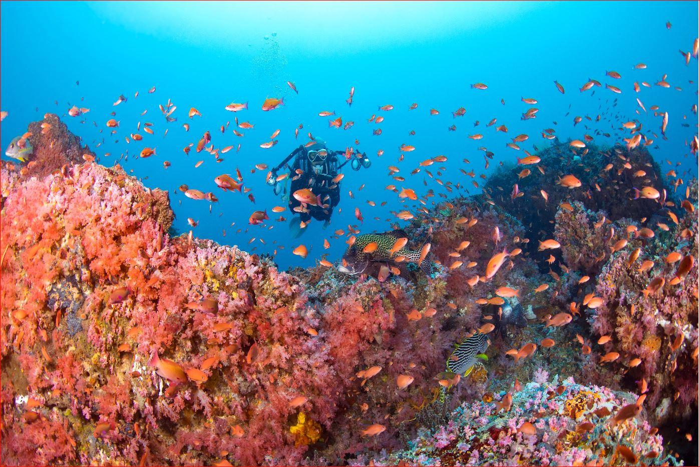 Puerto Galera's marine life