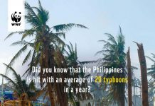 WWF typhoons