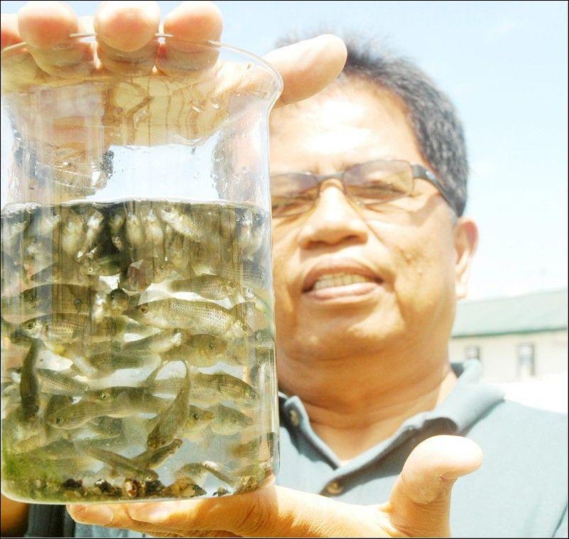 Mosquito fish bugs repellent