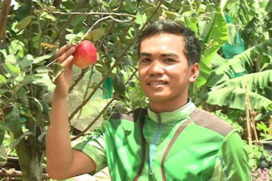 Benzone Sepe Apple Tree