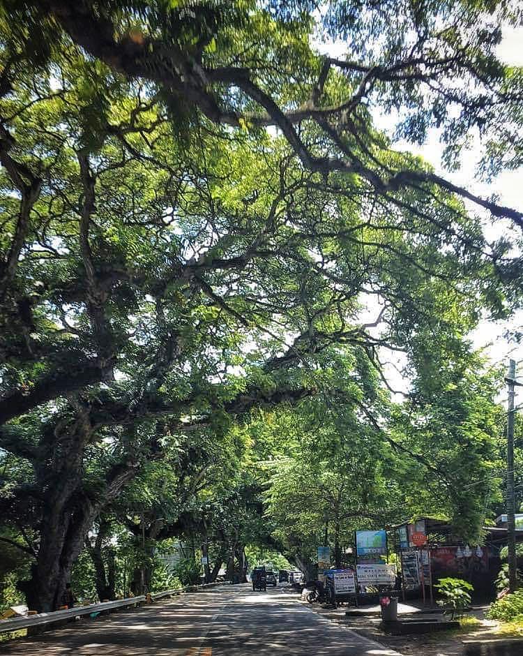 Cebu heritage trees