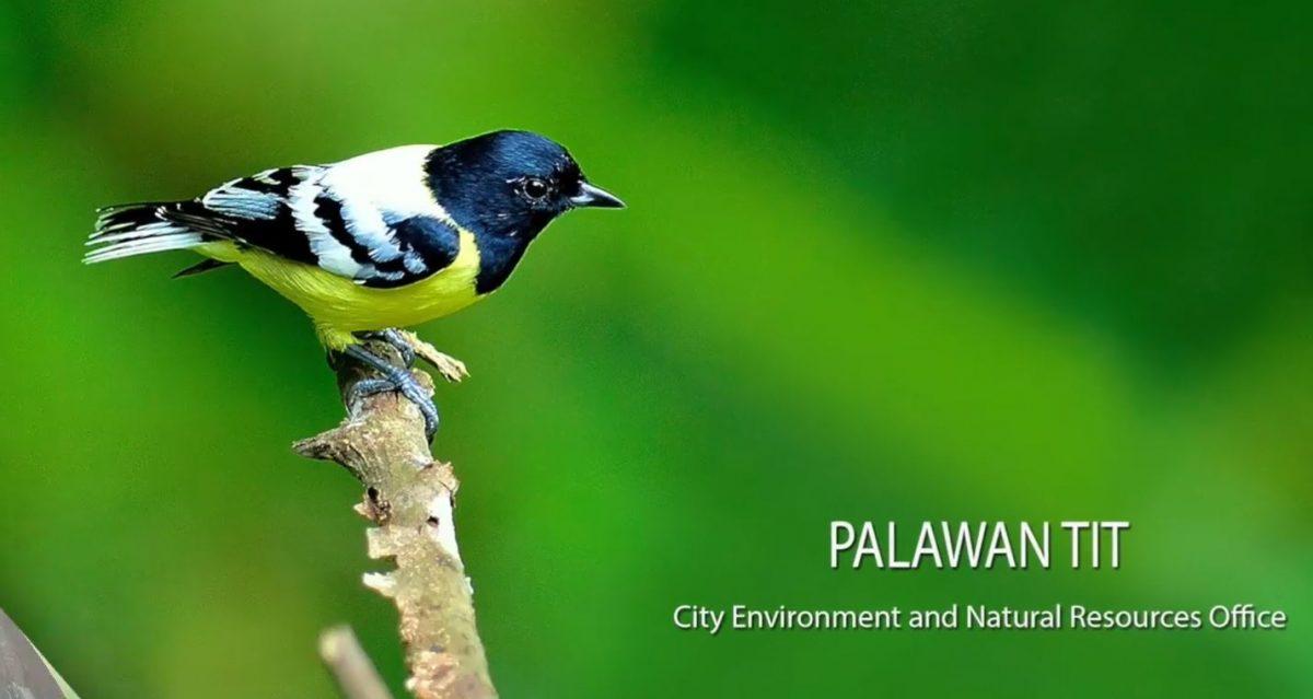 Palawan Philippine Bird Capital