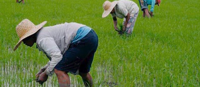 Bataan farmers three-pronged program