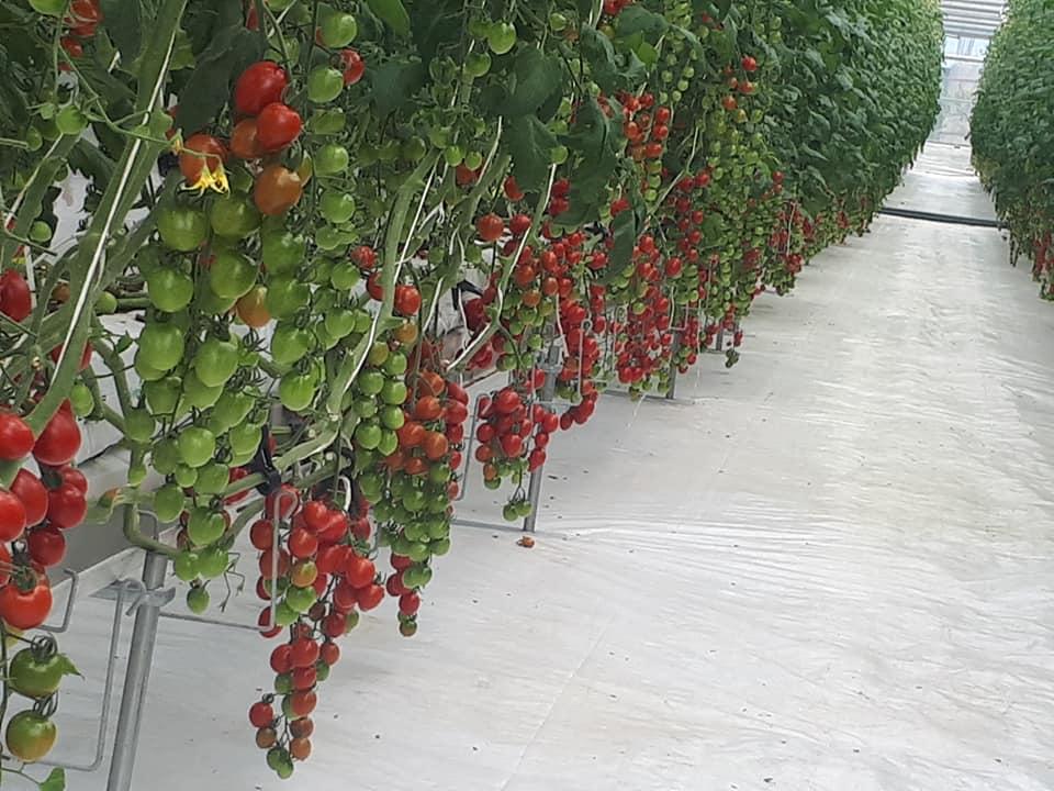 Fruits Veggies for nCov