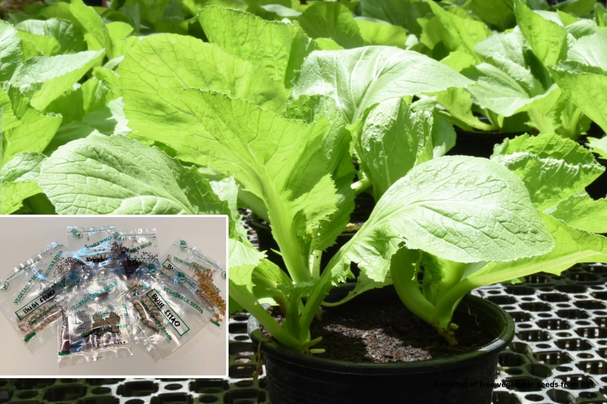Free seeds Urban Gardening