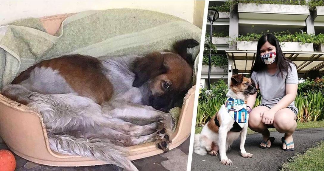 Abandoned dog rescued by PAWS