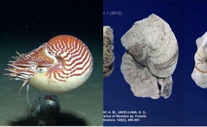 Philippines oldest Nautilus