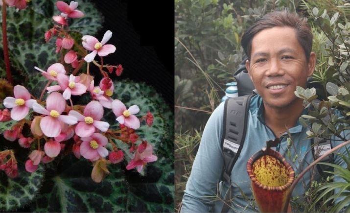 El Nido new discovered wildflower