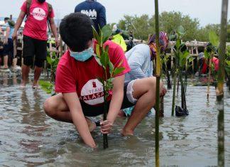 Manila Bay mangrove
