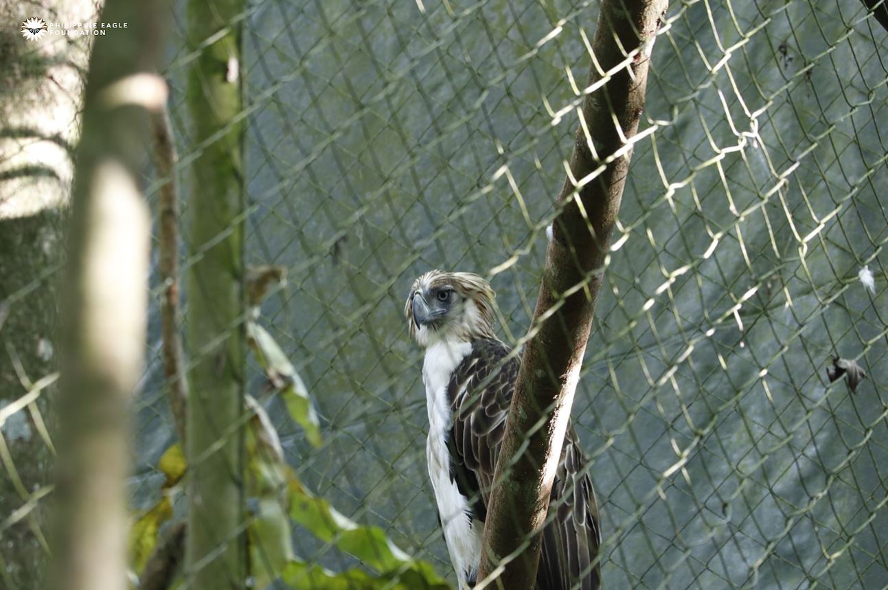 Philippine Eagle protection DMCI