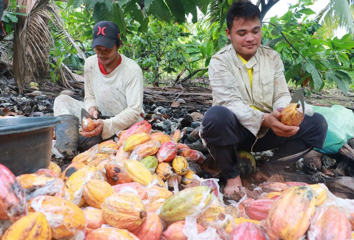 Davao City Officially named Cacao Capital