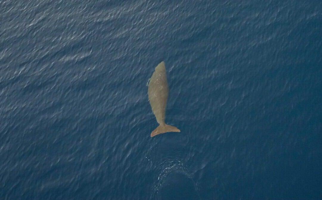 Dolphins, dugong spotted on Sarangani Bay