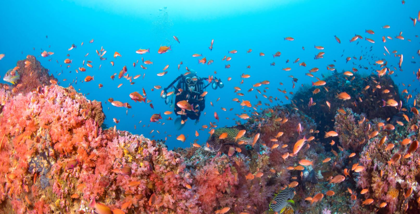 Philippines voted Best Diving Area