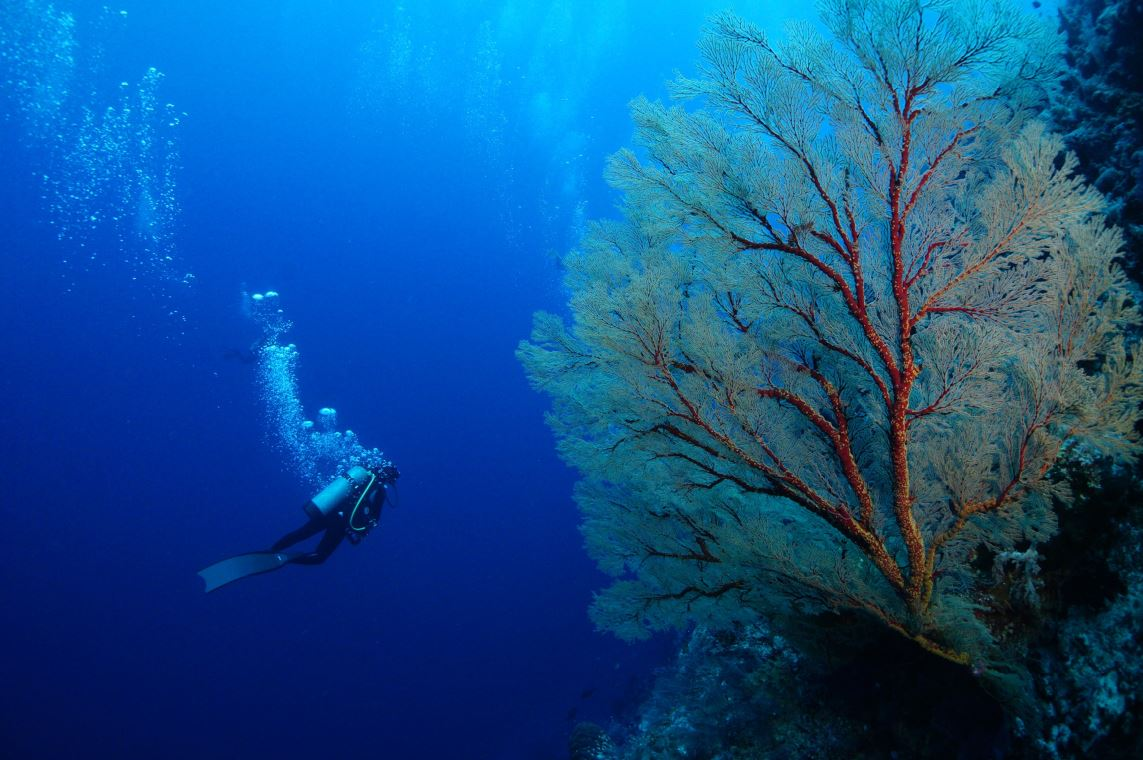 Lonely Planet's spectacular dive Palawan Cebu