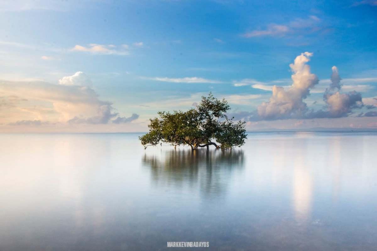 Macky Badayos Mangove Tree