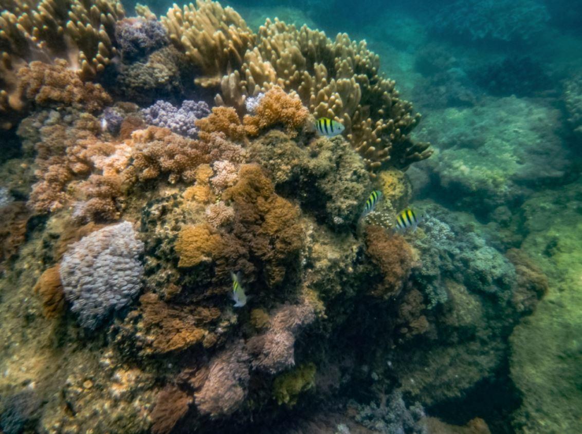 WWF coral reefs of pilar Sorsogon