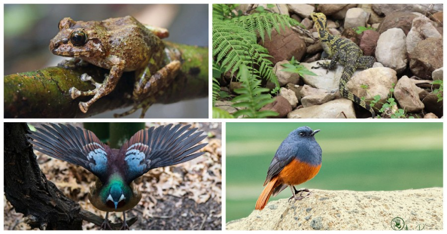 Philippine wildlife species