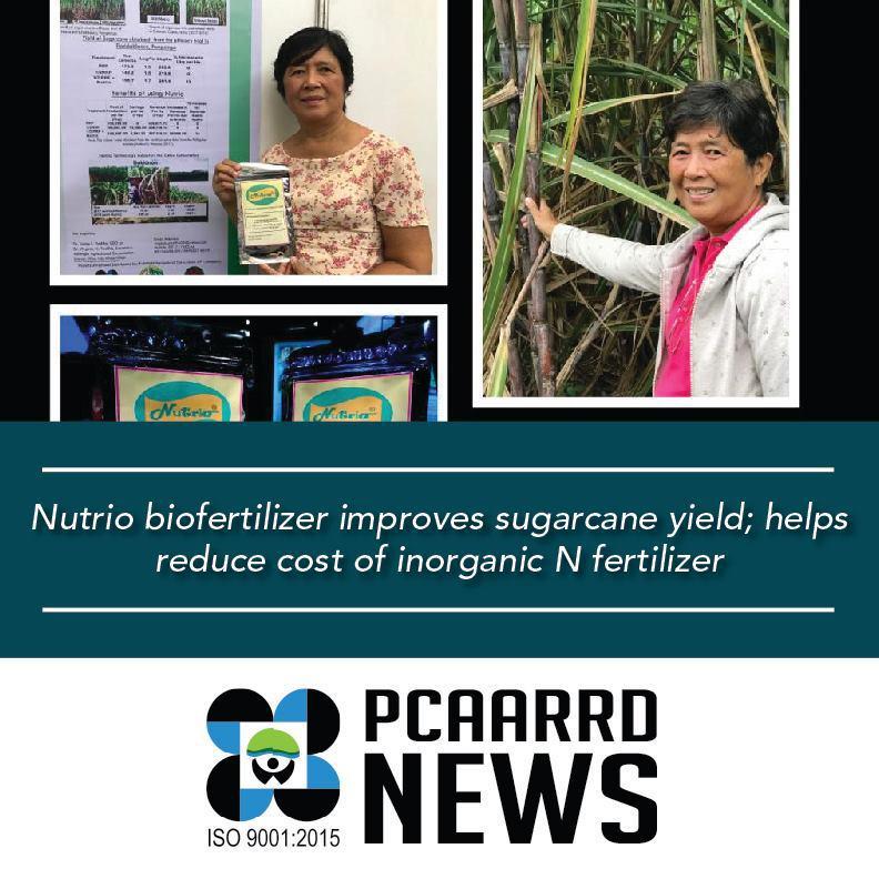 UP scientist bio-fertilizer sugarcane