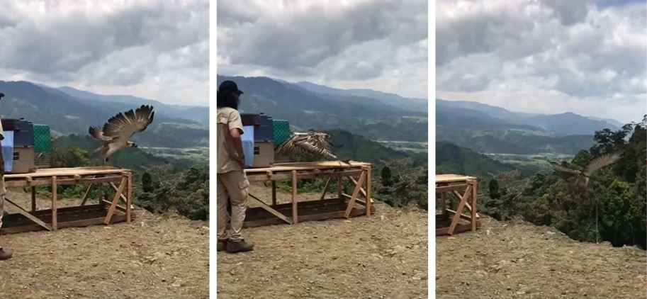 Earth Day Rescued Philippine eagle