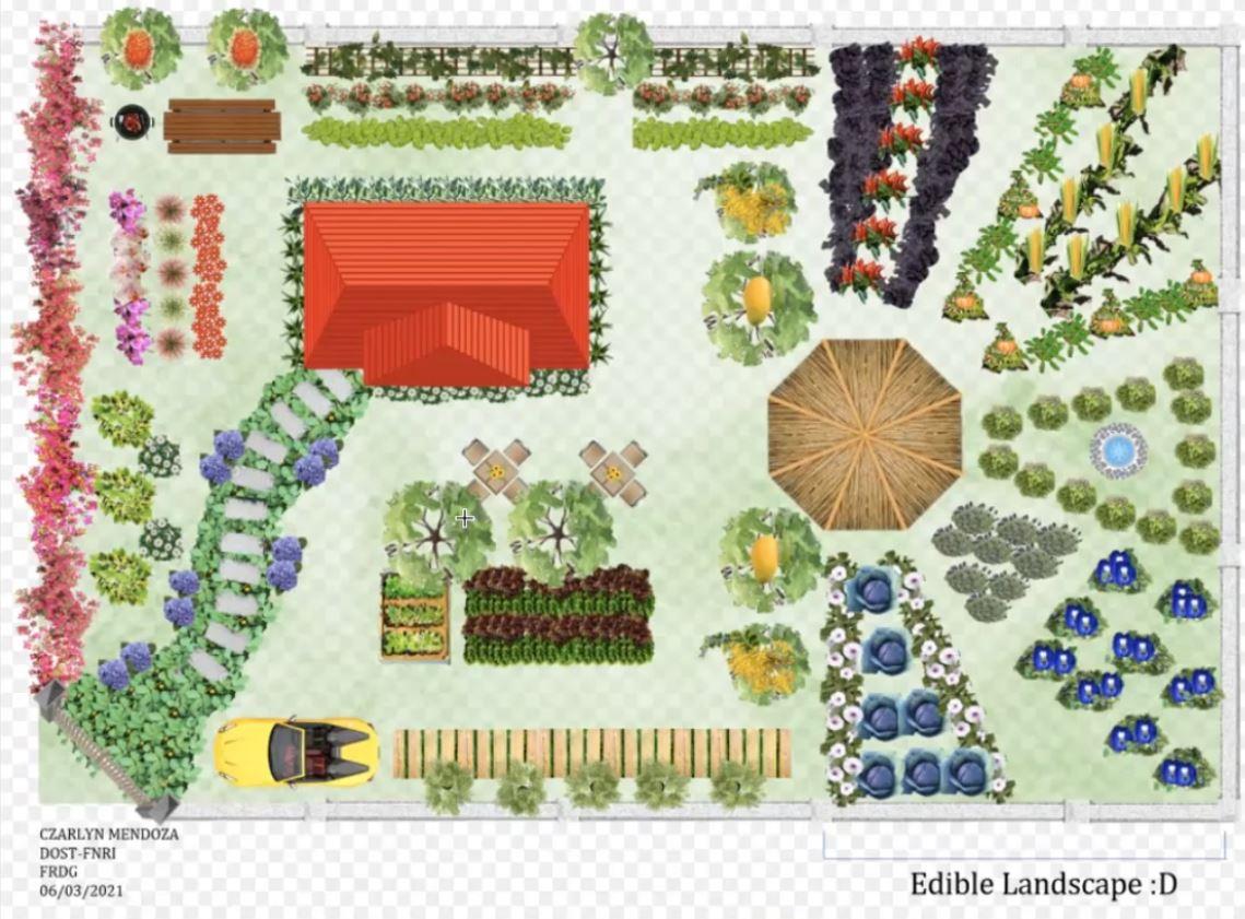 Filipino Edible Landscaping food production