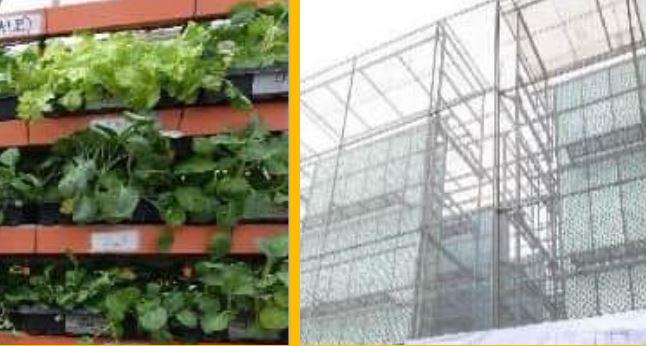 Metro Manila's tallest vertical farm